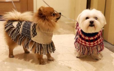 Abrigar a nuestro perro en los meses más fríos