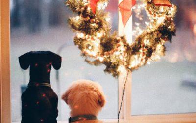 Celebrar la Navidad con nuestro perro